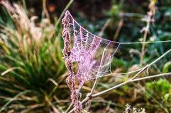 Рано утром в лесе паутина предусматривана с заморозком b Стоковая Фотография