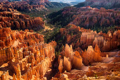 Рано утром в каньоне Bryce стоковая фотография