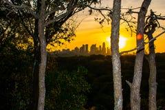 Рано утром деревья Гринбелт природы горизонта Остина Стоковая Фотография