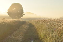 Рано утром на поле Стоковые Фото