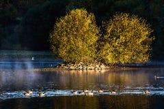Рано утром на резервуаре древесины плотины стоковые фото