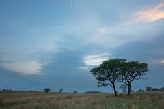 Рано утром на Ezemvelo NR Стоковые Фото