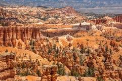 Рано утром обзор красочных hoodoos, нация каньона Bryce стоковое изображение rf
