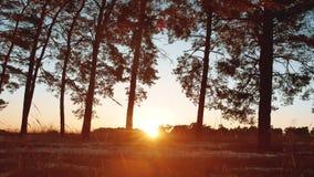 Рано утром с восходом солнца в сосновом лесе соснового леса красивом в зиме солнце светит через ландшафт природы деревьев видеоматериал