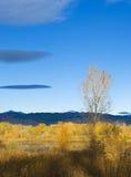 Рано утром тополь осени Стоковые Изображения