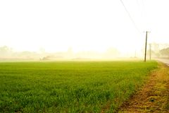 Рано утром Стоковые Изображения RF