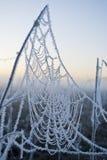 Рано утром fog, заморозок в поле, на зеленых растениях, предпосылка весны и, паутины в Стоковые Изображения RF