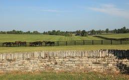 Ранчо лошади Кентукки стоковая фотография rf