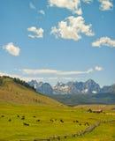 Ранчо скотин и горы, Айдахо стоковая фотография rf