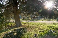 ранчо утра Стоковые Изображения RF