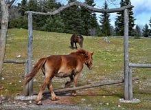 ранчо Стоковое Фото