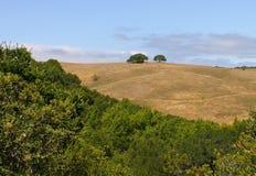 ранчо san antonio Стоковые Фото