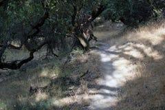 Ранчо Shiloh региональное парк включает полесья дуба, леса смешанных evergreens, гребней с широкими взглядами Santa Rosa стоковое изображение rf
