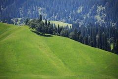 ранчо tianshan Стоковая Фотография
