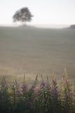 Раньше, туманнейше, утро лета в поле Стоковые Фотографии RF