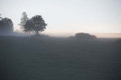 Раньше, туманнейше, утро лета стоковые изображения
