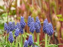 Раньше, цветки весны, цветки луга стоковое изображение