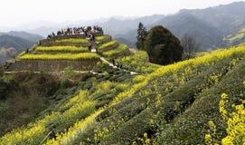 Рапс в цветени, людях в горах Стоковые Изображения RF