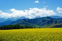 Рапс горы неба Стоковое фото RF