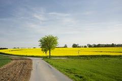 рапс ландшафта поля сельский Стоковое Изображение RF