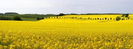 рапс панорамы поля Стоковые Фотографии RF