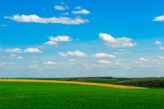 рапс поля земледелия Стоковые Изображения