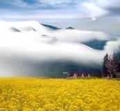 рапс поля облаков драматический Стоковое Изображение