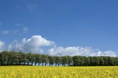 рапс поля сельской местности Стоковые Изображения RF
