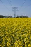 рапс рангоута поля электричества стоковые фотографии rf