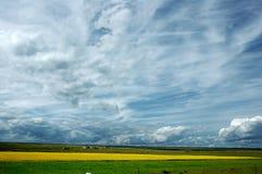 рапс цветка поля Стоковое Фото