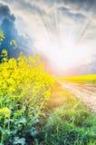 Рапс Frowers на дороге к заходу солнца стоковая фотография rf