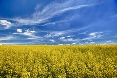 рапс oilseed поля цветя Стоковое фото RF