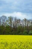 рапс oilseed поля Стоковые Изображения