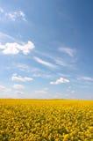 рапс oilseed Стоковая Фотография RF