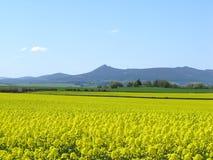 рапс oilseed bennachie Стоковое Изображение RF