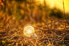 Раскаленная добела электрическая лампочка Стоковая Фотография