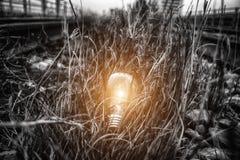 Раскаленная добела электрическая лампочка Стоковое Изображение RF