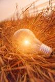 Раскаленная добела электрическая лампочка Стоковые Изображения RF