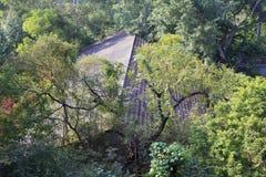 Расквартируйте спрятанный в лесе сада wanshi ботанического, самана rgb Стоковые Изображения RF