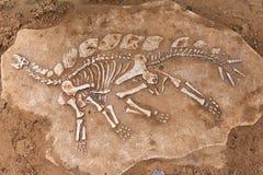 Раскопки динозавра стоковое изображение rf