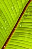 раскосные листья Стоковые Фотографии RF