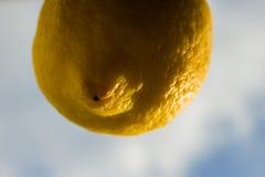 Раскрепощение фрукта и овоща которое мечтает небо стоковая фотография rf