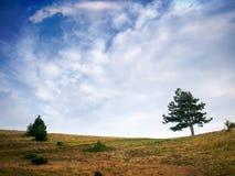 Раскройте горизонт сельской местности с деревом, кустом и драматическими синью и облачным небом Множество copyspace стоковое фото rf