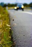 раскройте дорогу Стоковые Фотографии RF