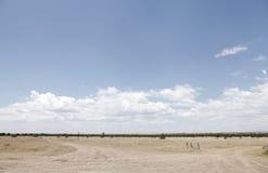 Раскройте злаковик и лес охраны природы Ol Pejeta, Кению Стоковые Фото