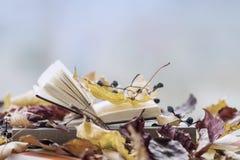 Раскройте книгу на конце-вверх среди листьев осени, космосе windowsill экземпляра, солнечном дне падения, светлой предпосылке, ко Стоковая Фотография