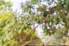 Раскройте книгу с зеленой предпосылкой bokeh дерева Стоковые Изображения