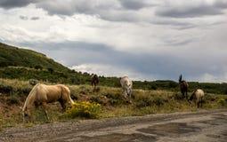 Раскройте лошадей ряда в летнем времени Стоковые Изображения RF