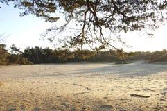 Раскройте поле в лесе Стоковое фото RF