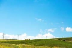 Раскройте поля виноградника с ветротурбинами стоковое изображение